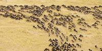 Masai Mara Holiday Packages