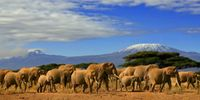 Amboseli Holiday Packages