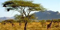 Samburu Holiday Packages