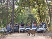 Bandhavgarh Holiday Packages
