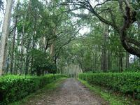 South India Package with Coorg - 9 Days,Bangalore
