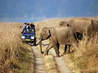 Mussoorie & Corbett  Budget Holiday package for 5 days,Mussoorie