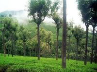 Bangalore, Mysore and Ooty Package - 6 Days,Bangalore